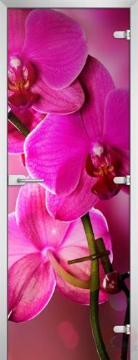 Дверь стеклянная Flowers-19 матовое бесцветное