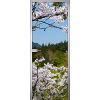 Межкомнатная стеклянная дверь Цветы